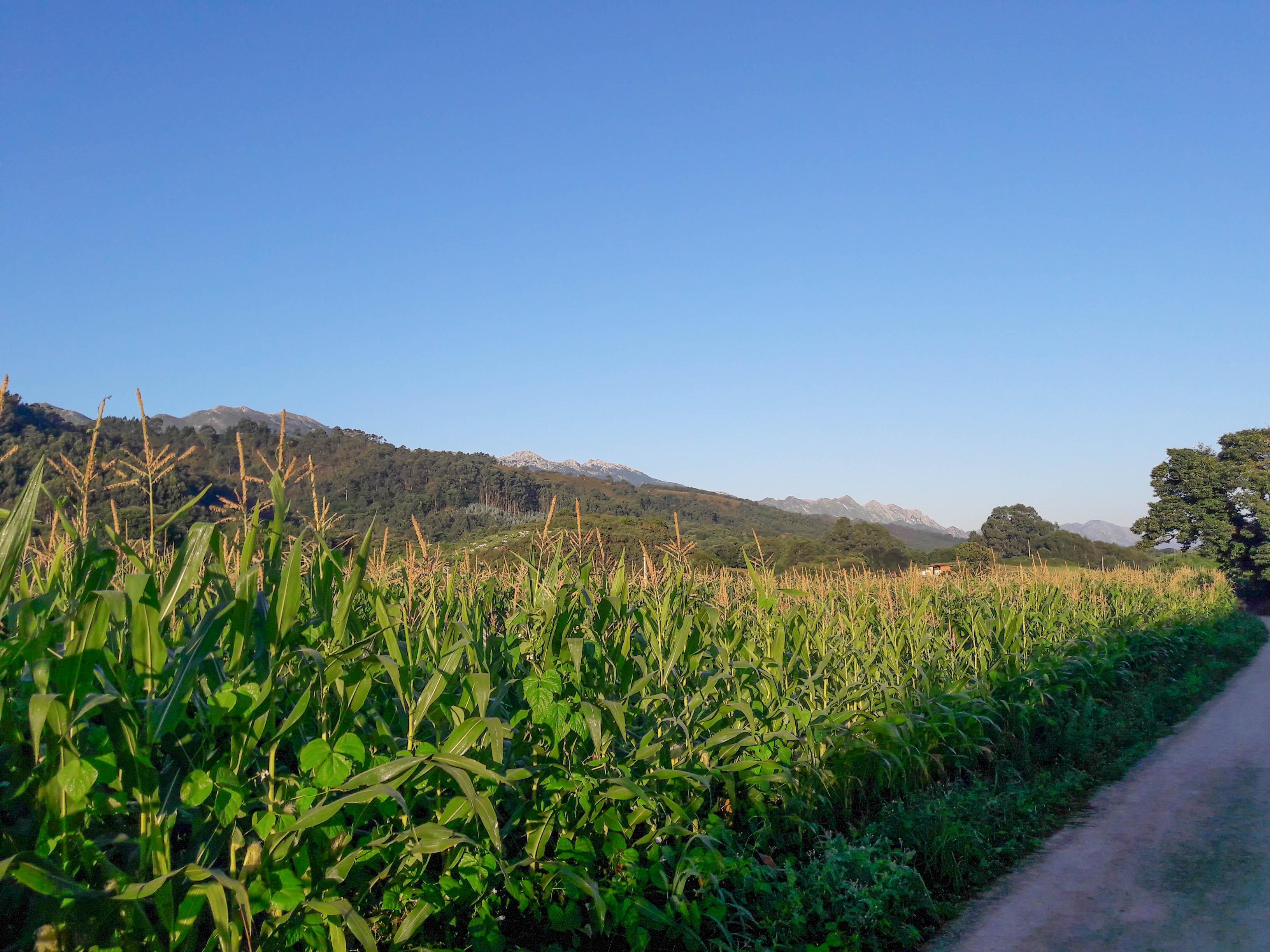 Asturian landscape