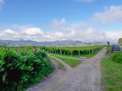 Vineyards en route to Getaria