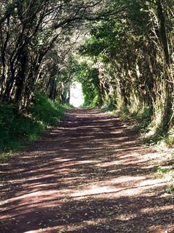 Galician woodland