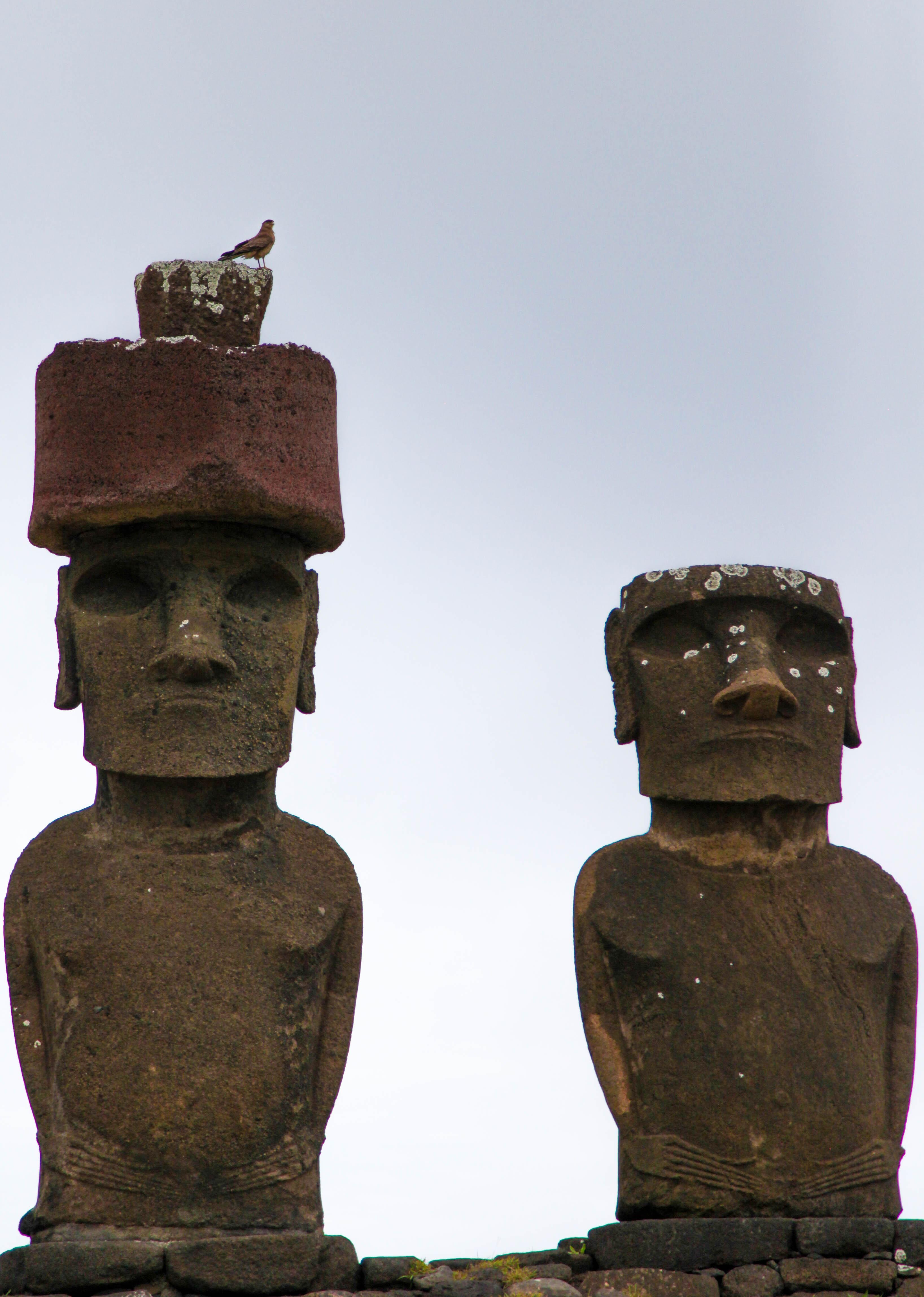 Ahu Nau Nau moai with Cimango Caracara on its pukao