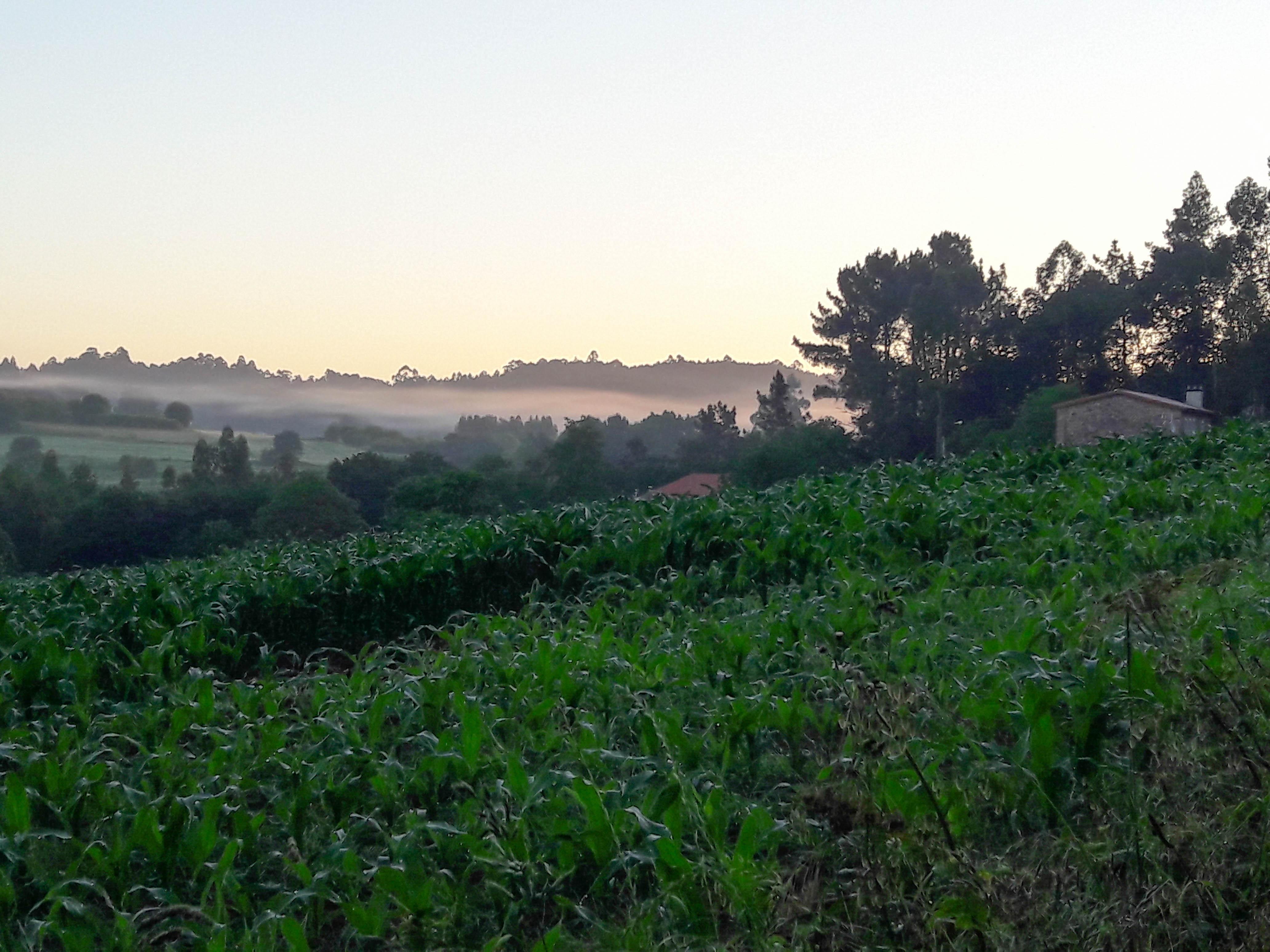 Morning mist, Sergude, Galicia