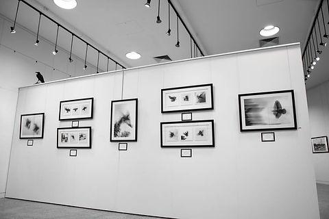 Exhibition Shots  (75).jpg