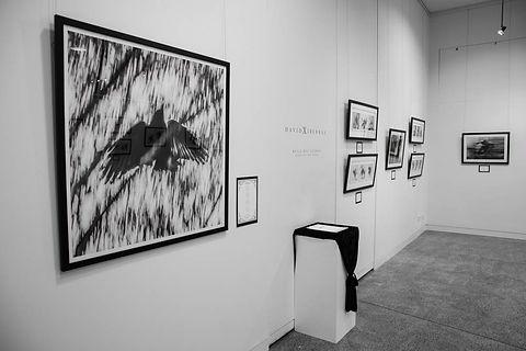 Exhibition Shots  (70).jpg