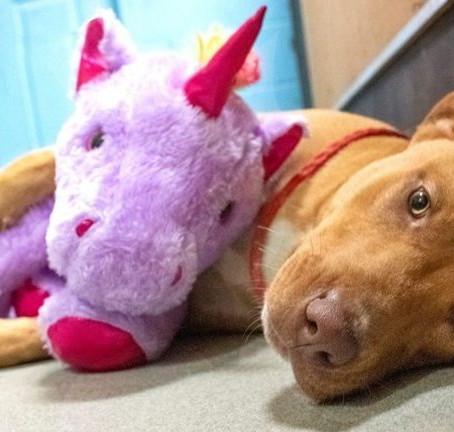 Lila plüssunikornist próbált többször is ellopni egy áruházból a kóbor kutya - végül megvették neki