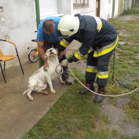 Kútba esett kutyát mentettek meg a tűzoltók - fotók