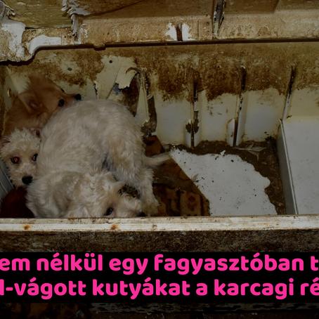 Víz és élelem nélkül egy fagyasztóban tárolta a hangszál-vágott kutyákat a karcagi rém