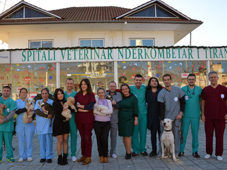 Free treatment for the pets injured in the earthquake in albania