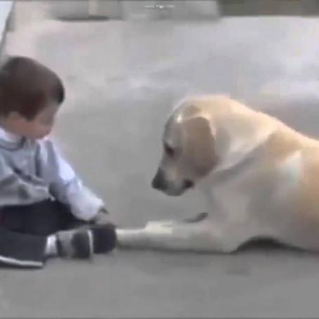 Egy kutya segített legyőzni érintésfóbiáját a Down-kóros kisfiúnak