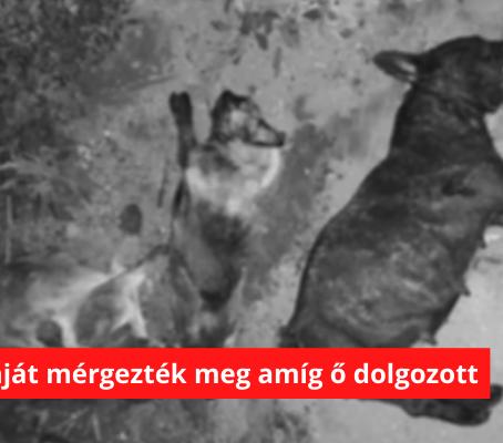 Amíg dolgozott mind a négy kutyáját megmérgezték