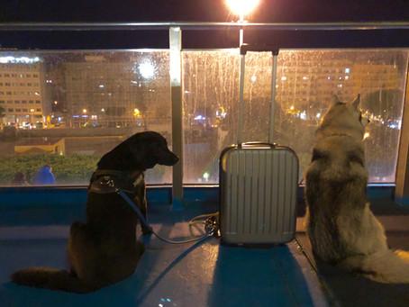 Szicília kutyákkal.  1. rész - A kutyabarát komp