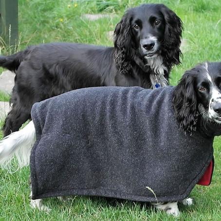 HŐSÉGRIADÓ - életveszélyes lehet kutyát sétáltatni