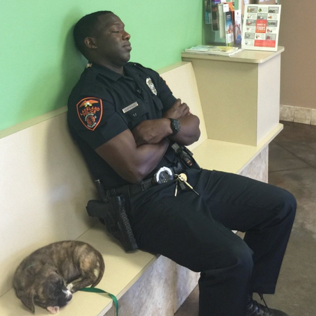 Police Officer Stays At Shelter Overnight With Stray He Rescued