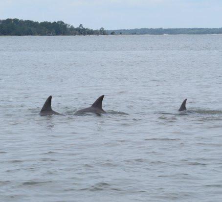 Delfineket videóztak a Balatonnál - Százak indultak meg a magyar tengerhez - VIDEÓ