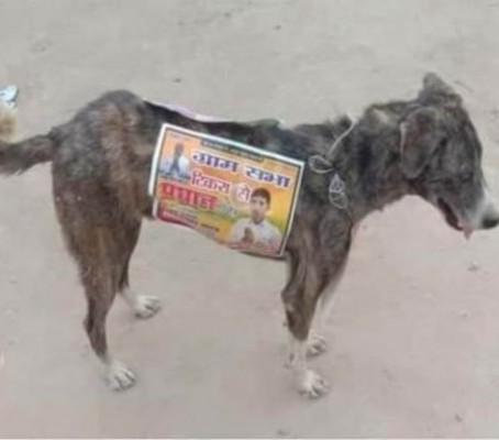 Kóbor kutyákat használnak mozgó hirdetőtáblaként indiai politikusok