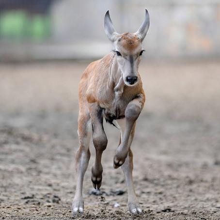 Nagyon ritka állat született a Debreceni Állatkertben: tündéri fotók a kölyökről