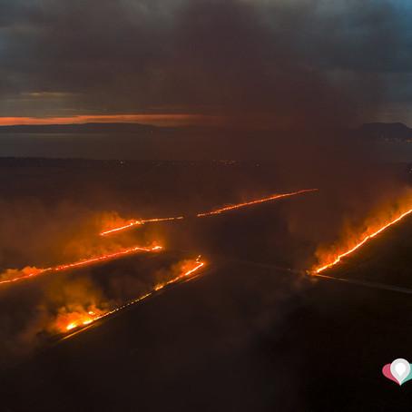 Lángokban áll egy balatoni mező, állatok százai lehetnek veszélyben.