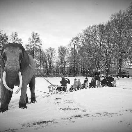 Eddig nem látott információk érkeztek az elefántok haláláról.
