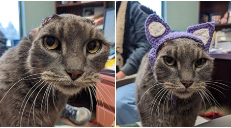 One Cat Tragically Loses Her Ears And Receives A Stylish Crocheted Pair To Replace Them