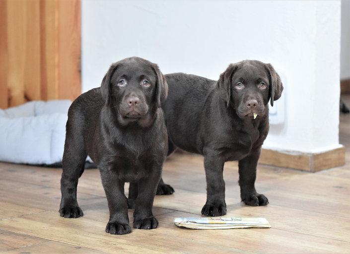 Puppies 2 months 8.jpg