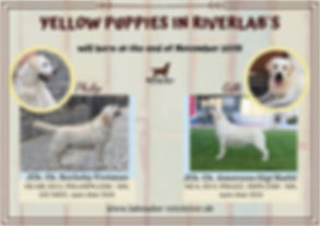 We will have yellow puppies at the end o