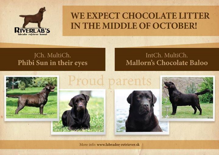 _____ Chocolate litter in our kennel!!!