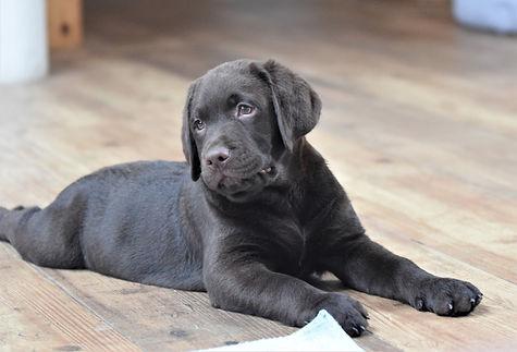 Puppies 2 months 10.jpg