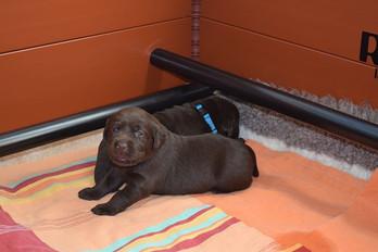 3 weeks old girl.jpg