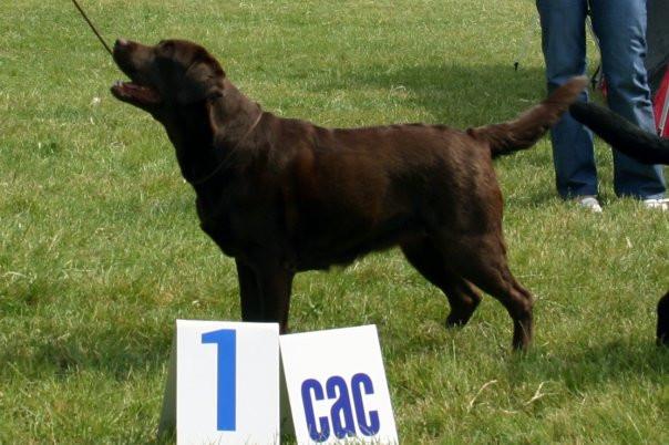 CAC Senec- V1, CAC.jpg