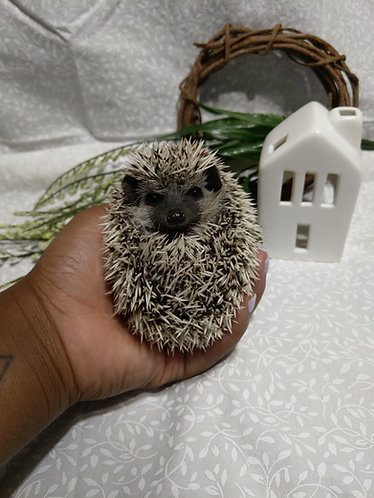 ~ADOPTED~Popcorn