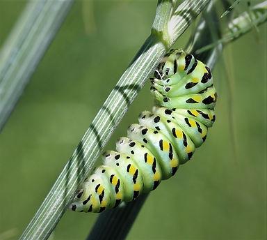 News-Butterfly2.JPG