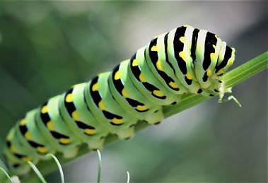 News-Butterfly1.jpg