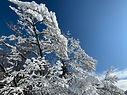 Home Winter 13.jpg