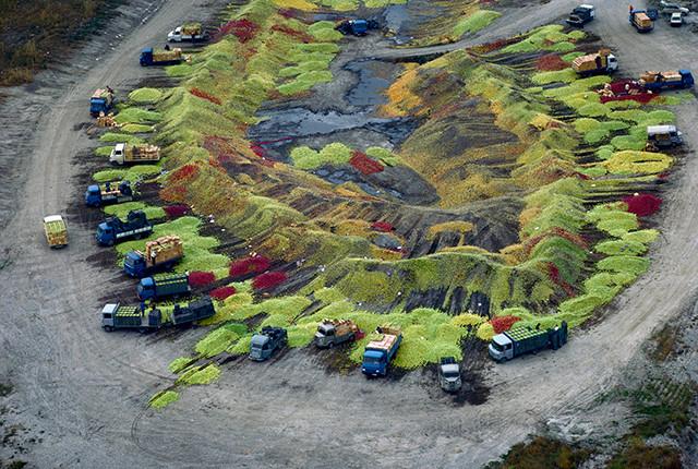 Dans le Vaucluse, les pommes retirées du marché sont vouées à la destruction © Hans Silvester
