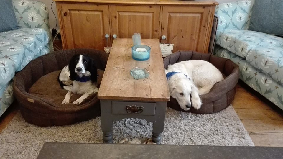 Clare Manuel's Dogs