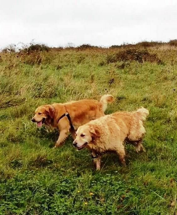 Maisey and ernie