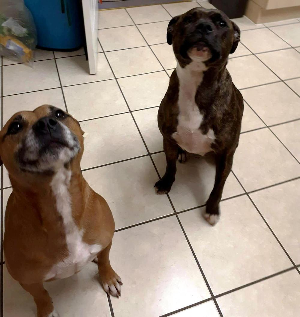 Hugo and Murphy