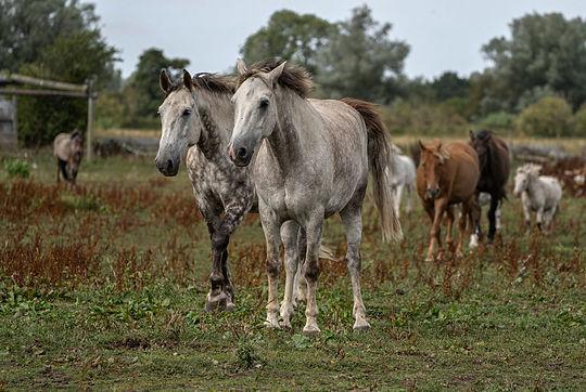 Horse 7.jpg