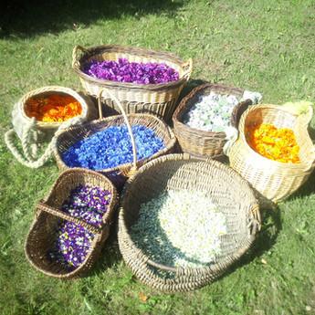 mes jolies cueillettes de fleurs