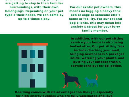 Pet Sitting vs. Boarding