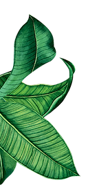 poster green paradise feuille.png