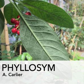 PHYLLOSYM_picto_WEB.jpg
