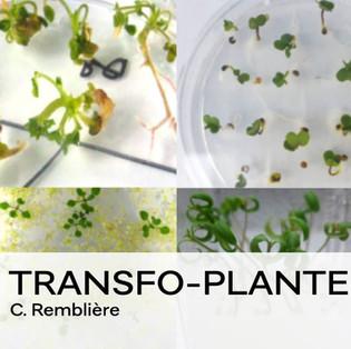 TRANSFO-PLANT