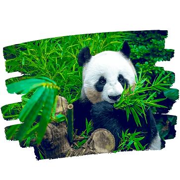 Panda-web-2-2.png