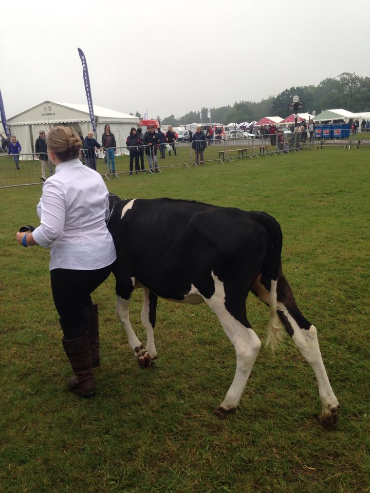 Showing at Kent Show