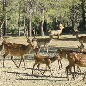 Parc de Coulondres Philippe-Eldridge - Saint-Gély-du-Fesc