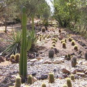 Cactus Park- Bessan