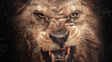 50 Cent Animal Ambition: An Untamed Desire To Win - Mastered At Engine Room Audio