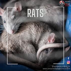 rats (1).png