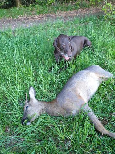 das sind die Jagderlebnisse, die ewig in Erinnerung bleiben....