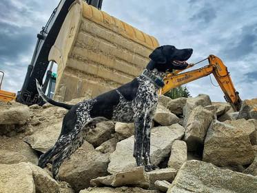 Benelli - erfolgreich in der Rettungshundestaffel